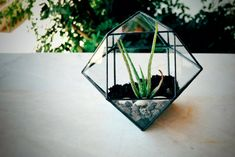 Small Geometric Glass Terrarium / Handmade Glass by MuditaCrafts