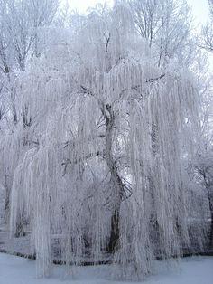 tree_white