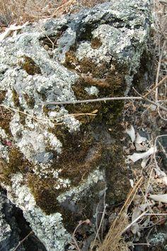 Roca volcánica con musgo