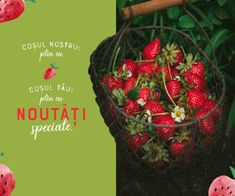 vegis.ro%20 Strawberry, Christmas Ornaments, Fruit, Holiday Decor, Food, Home Decor, Health And Wellness, Decoration Home, Room Decor