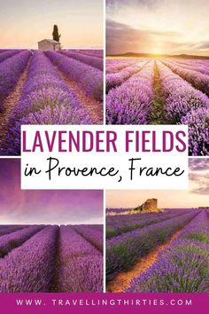 Are planning at trip to Provence to visit the Lavender Fields? Here is everything you need to know from where to stay, to getting around provence and of course, the best Lavender fields to visit in Provence. #provence #lavenderfieldsLavender Fields | Lavender Fields France | Lavender Fields Photography | Lavender Fields Photography landscape | Lavender Fields photoshoot | Provence France countryside | How to visit the lavender fields in Provence | France travel tips | provence travel