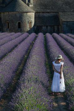 Lavender ~ Senanque Abbey ~ France