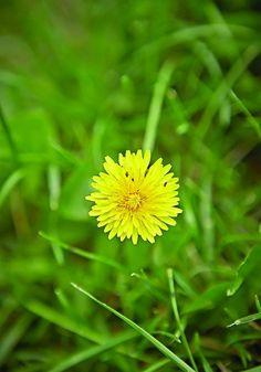 5 healing plants you need in your garden