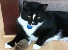 ***Please help us find Puss (also known as Pingu), missing in Langley Moor***since Tuesday 20th September. He is a neutered and chipped two-year-old house cat. He's very shy and not used to being outdoors. Tel: 07767 457231