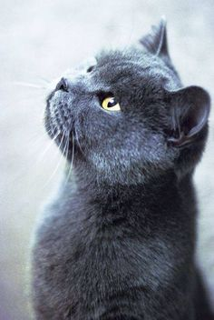 How beautiful is this cat!