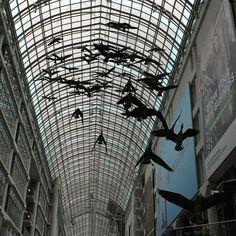 Image result for eaton centre geese