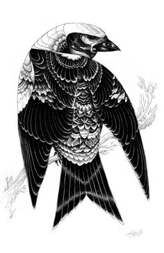 Black and white illustrations by Iain Macarthur