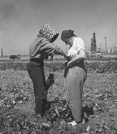 Dorothea Lange Being Shown How to Tie on a Potato Sack, 1937