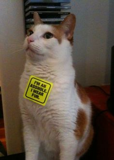 PETA was in town the other day, protesting the abuse of animals and handing out stickers. I gave one to my cat. - Imgur