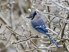 How To Attract Birds To Your Garden During the Winter