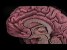The Human Brain: How We Decide - YouTube