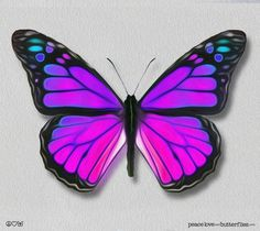Viceroy Monarch Butterfly Painted Wings Purple-Blues, Bright & Vivid on Gallery Quality Canvas Art, options: peace love and butterflies .comViceroy Monarch Butterfly Painted Wings Purple-Blues, Bright & Vivid on Gallery Quality Canvas Art,