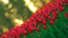 Elvin Siew Chun Wai likes Nature and Flowers Photography.Elvin Siew shares the beautiful photos.