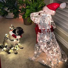 Xmas pug will not be outdone by this impostor  :p