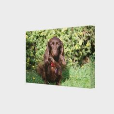 Brown Long-haired Miniature Dachshund Canvas Print   blonde dachshund puppy, dachshund ornament, halloween dachshund #dachshundsarethebest #dachshundslovers #dachshundsdownunder