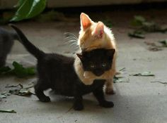 """""""I bind you Nancy from doing harm, harm against other people and harm against yourself.""""Happy #Caturday Gigglers!"""