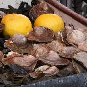 How to Steam Oysters   eHow