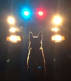 K-9...We See You