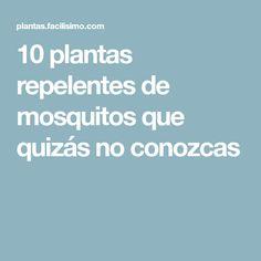 10 plantas repelentes de mosquitos que quizás no conozcas
