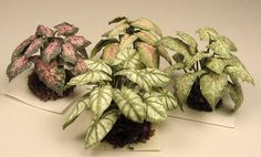 Houseplant Kits - Dollhouse Miniatures