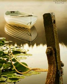 "wakeourworld: "" "" Morning light by David Mould "" Old Boats, Small Boats, Row Row Your Boat, The Row, On Golden Pond, Boat Art, Float Your Boat, Lily Pond, Life Is A Journey"