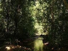 Image result for cambodian jungle
