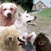Welkom Van, Dogs, Animals, Animales, Animaux, Pet Dogs, Doggies, Animal, Animais