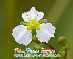 Chronic Kidney Disease Kidney Failure Ckd Chronic