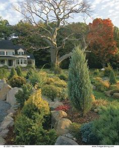 Add color for accent. A bronzy Thuja occidentalis 'Sudworthii' brightens hinoki cypress ( Chamaecyparis obtusa 'Nana Gracilis'), at lower left, and 'Moonglow' juniper ( Juniperus scopulorum 'Moonglow'), right.