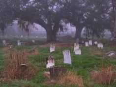 Oaks in Holt Cemetery in fog. New Orleans, Louisiana, December 18, 2006
