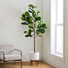 Fig Leaf Tree, Fig Leaves, White Planters, Wood Planters, Ficus Elastica, Faux Plants, Indoor Plants, Fig Plant Indoor, Indoor Plant Decor