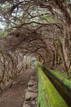 One of the prettiest (and easiest) hike in Madeira to 25 Fontes (the source of this levada).