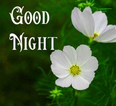 Good Night Images with flowers and nature - PIX Trends Sweet Good Night Images, Sweet Dreams Images, Good Night To You, Photos Of Good Night, Good Morning Beautiful Pictures, Good Night Sweet Dreams, Good Night Moon, Good Morning Images, Good Night Greetings