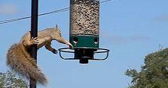 Une hilarante compilation de drôles d'animaux!  http://rienquedugratuit.ca/videos/une-hilarante-compilation-de-droles-danimaux/