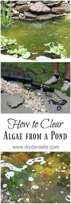 How to clear algae from a pond with a UV light. No elbow grease or water changes required. Pond Algae, Pond Plants, Backyard Water Feature, Ponds Backyard, Garden Ponds, Backyard Ducks, Backyard Waterfalls, Pond Landscaping, Landscaping With Rocks