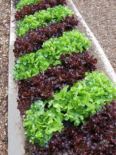Plant a Cool-Season Vegetable Garden | Edible garden and Garden ...