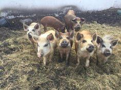 TheLittleFlockFarm A family farm sharing the love and joy of a healthy lifestyle, Sharing animal hugs with all! @ellislarissa.H