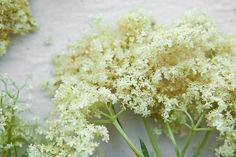 Elderflower by continental drift, via Flickr  http://theyearinfood.com/2012/05/elderflower-syrup.html#