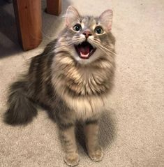 Cats of Imgur pt. 2 - Imgur