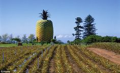 South Africa's Big Pineapple-- There's no better place to look out over the Eastern Cape's pineapple industry than from the top-floor observation deck of this nearly fiberglass pineapple. Big Pineapple, Tourist Spots, Being In The World, Stonehenge, Places Of Interest, Weird And Wonderful, South Africa, Attraction, Beautiful Places