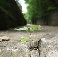 small tree growing in crack2