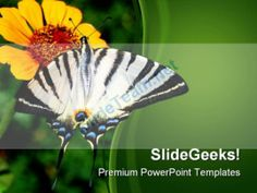Gerbera Flower Nature Powerpoint Template  Powerpoint