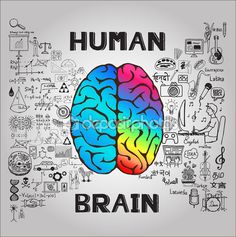 Human brain concept with science business doodles. Brain Science, Science Art, Left Vs Right Brain, Biology Art, Brain Facts, Brain And Heart, I Kid You Not, High School Classroom, Emotion