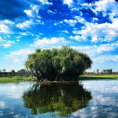 Il Kakadu National Park ha qualcosa di magico. C'è qualcosa di unico nel cielo, nelle sue nuvole, nei suoi animali, nel vento caldo. Lui, é l'albero che mi ha conquistata durante la nostra Yellow water cruise, uno dei momenti migliori per il birdwatching e io li, a perdermi nei paesaggi. #nx30 #ntaustralia @ausoutbacknt #seeaustralia #topendnt