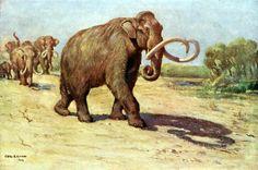 Columbian Mammoth (Mammuthus columbi) Charles R. Knight