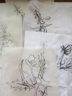 Cas Holmes, Plant Sketches