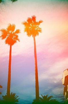 sunset, palm trees, california