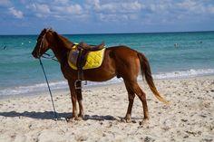 Photo by Ivana Piskáčková Horse Tack, Mammals, Mustang, Horses, Beach, Mustangs, The Beach, Seaside, Horse