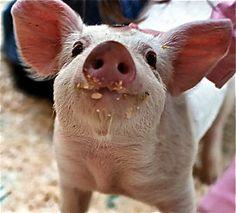 piglet xx                                                                                                                                                     More