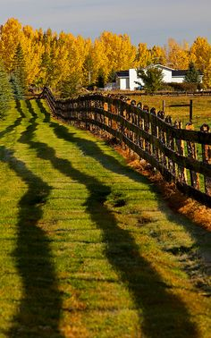 Ranch Shadows, Alberta, Canada